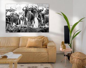 Kudde gnoes / Wildebeesten bij drinkplaats sur Tom van de Water