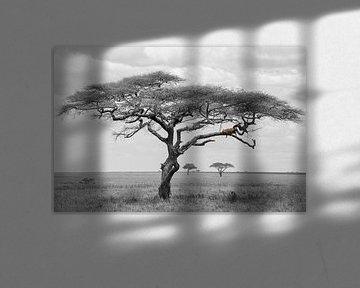 Léopard dans l'arbre sur Tom van de Water