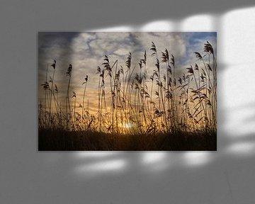riet met zonsopkomst van Ferry Kalthof