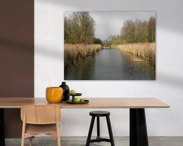 Rietkragen aan de waterkant in Flevoland van Ingrid Van Maurik