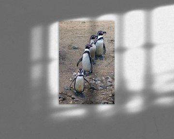 Rij pinguïns  van Jeroen van Deel