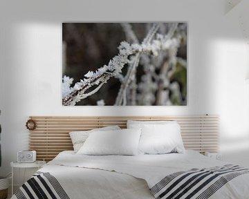 Wit als sneeuw  van Amber Garrits