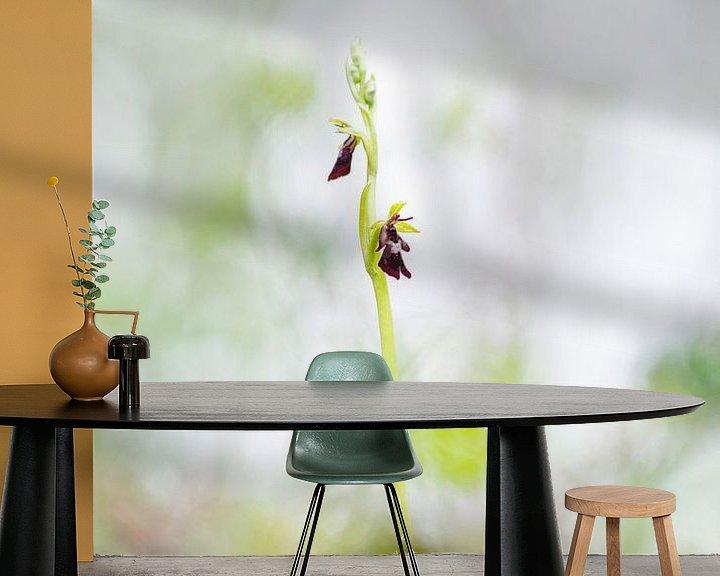 Sfeerimpressie behang: Vliegenorchis - Ophrys insectifera van Mark Meijrink