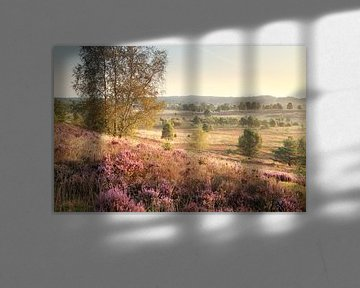 hills with heather in morning sunlight van Olha Rohulya