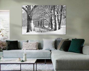 Eiken in een winters bos. sur Tony Ruiter