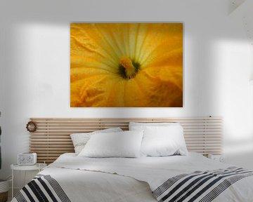 gele bloem van Joke te Grotenhuis