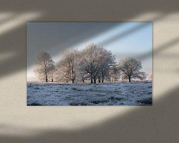 Winter op de Veluwe 02 van Cilia Brandts