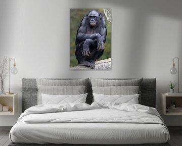 Bonobo van Edwin Butter