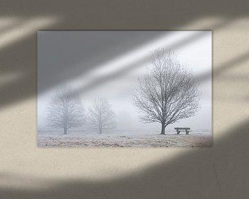 Een mistige ochtend van Barbara Brolsma