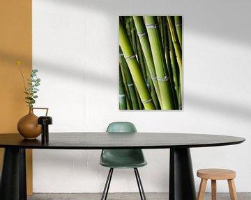 Bamboe van Nanette de Jong