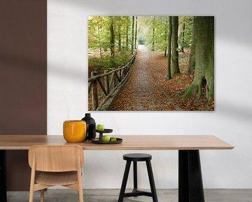 Park Sonsbeek in de herfst van Petra Dielman