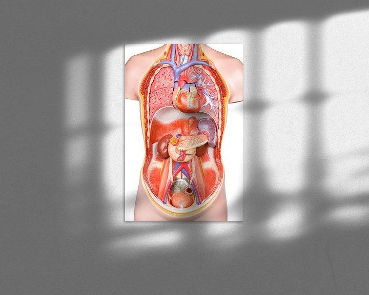 Sfeerimpressie: Model menselijk lichaam op witte achtergrond van Ben Schonewille