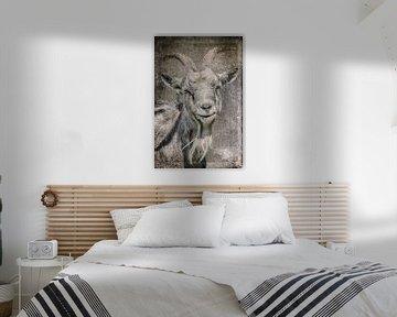 Chèvre sur Freddy Hoevers