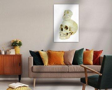 Schedels van mens en aap bovenop elkaar van Ben Schonewille
