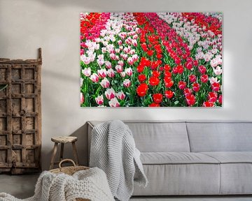 Tulpenveld mit mehreren roten und rot mit weißen Tulpen auf dem Keukenhof in den Niederlanden von Ben Schonewille