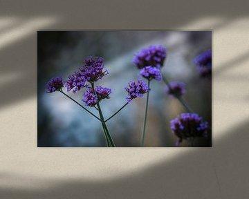 Paarse bloemen  von AnyTiff (Tiffany Peters)