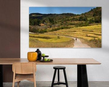 Wandelen door de rijstvelden van Cindy Nijssen
