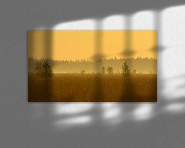 Fochteloërveen landschap in tegenlicht van Remco Van Daalen