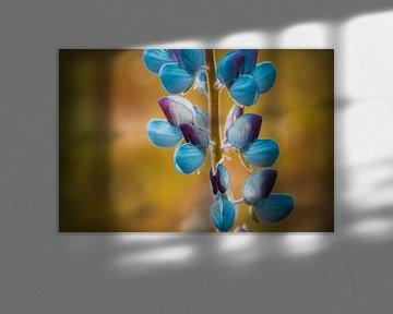 Paarse bloemblaadjes von Stedom Fotografie