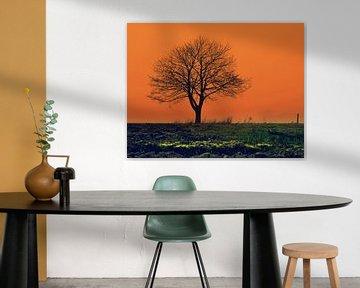 Eenzame boom in een oranje decor van Joyce Derksen