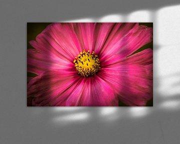 Große rosa Blume von Stedom Fotografie