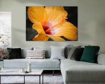 Grote gele bloem von Stedom Fotografie