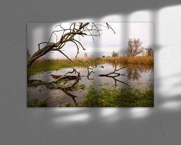 waterpartij met riet en bomen in de oostvaardersplassen von Bernadet Gribnau