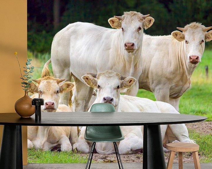 Beispiel fototapete: Gruppe beige weiße Kühe auf der grünen Wiese posieren von Ben Schonewille