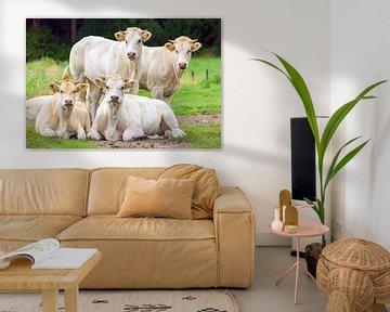 Gruppe beige weiße Kühe auf der grünen Wiese posieren von Ben Schonewille