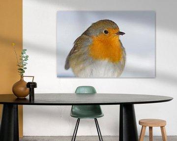 portret van Roodborst(je)