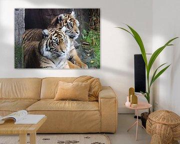 twee tijgers  van Jop Fotografie