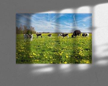 Moeder koe met pasgeboren kalfjes in wei met paardenbloemen van Ben Schonewille