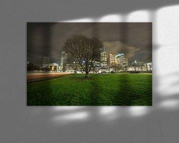 Historische boom in Den Haag van Esther Seijmonsbergen
