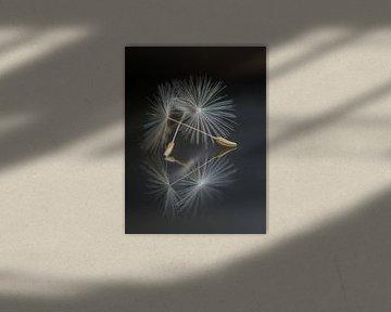 Blowing in the wind van Cynthia Derksen