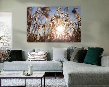 Zonlicht door rietpluimen aan oever van het water van Tot Kijk Fotografie: natuur aan de muur