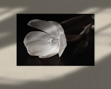 Black and white tulip van LHJB Photography