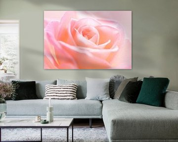 Close-up of a beautiful soft pink colored rose blooming in soft  van LHJB Photography