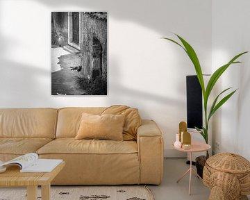 Taormina (Siciliaans: Taurmina)  Sicilië Italië. slapende kat fotoposter of  wanddecoratie