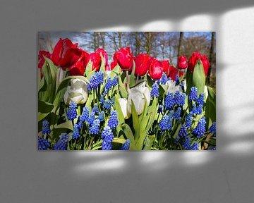Tulpen und Traubenhyazinthen mit den nationalen Farben rot weiß blau im Frühjahr von Ben Schonewille