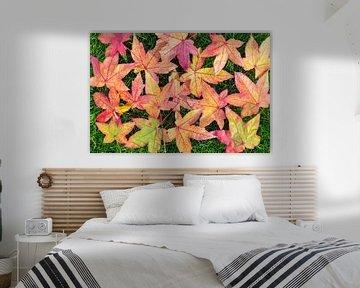 Veel kleurige bladeren van esdoorn in herfst van Ben Schonewille
