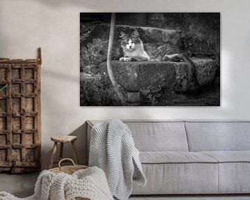 poes / kat op trap fotoposter of  wanddecoratie