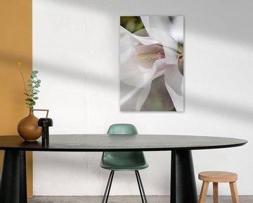 Magnolia bloem in de bloei van Tot Kijk Fotografie: natuur aan de muur