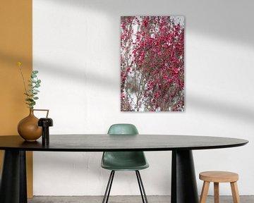 Roze bloesem op een witte muur van Tot Kijk Fotografie: natuur aan de muur