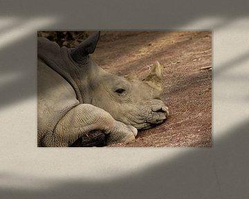 Neushoorn von Kim de Groot