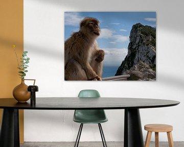 Gibraltar aapje von kees luiten