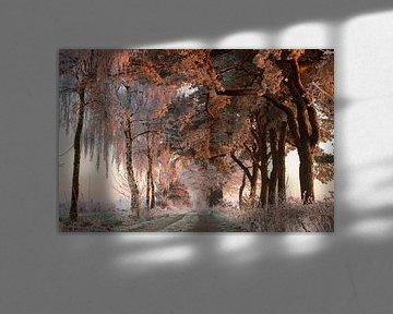 Winter wonderland van Paul Wendels