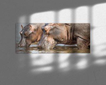 Nijlpaarden panorama von Antwan Janssen