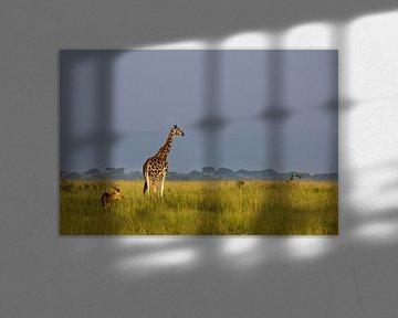 Rothschild giraffe von Antwan Janssen