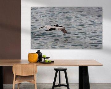 Dominicaanse albatros von Jelle Ursem