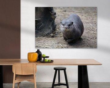 otter von Jop Fotografie